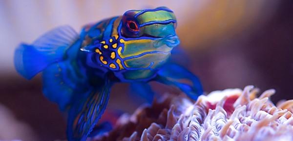 Produits pour nourrir les habitants de l'aquarium et les coraux
