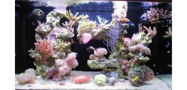 Roches d'aquarium