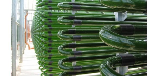 Organisch gezüchtetes Phytoplankton