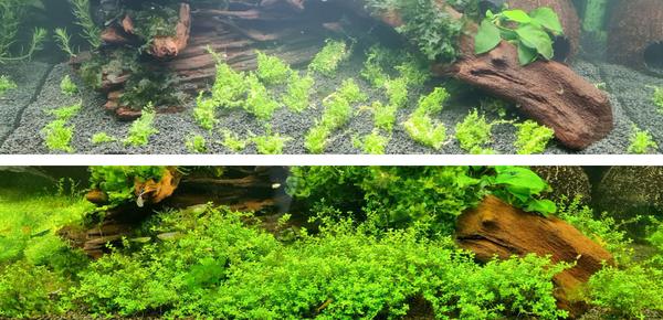Starten Sie Ihr Süßwasseraquarium - Daphbio