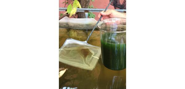 Cultivo de dafnias y microfauna