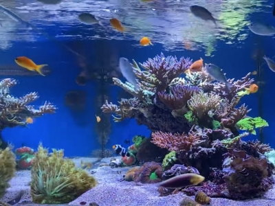 How to start up your reef or saltwater aquarium?
